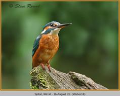 kingfisher-18.jpg
