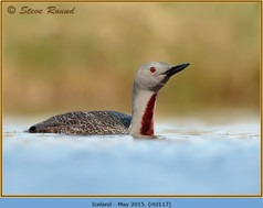 red-throated-diver-117.jpg
