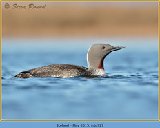 red-throated-diver- 72.jpg