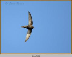 swift-10.jpg