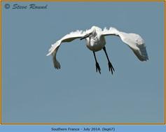 little-egret-67.jpg