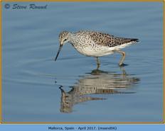 marsh-sandpiper-06.jpg