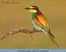 bee-eater-43.jpg