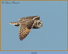 short-eared-owl-56.jpg