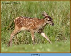 red-deer-83.jpg