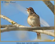nightingale-04.jpg