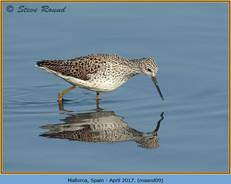 marsh-sandpiper-09.jpg