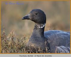 brent-goose-06.jpg