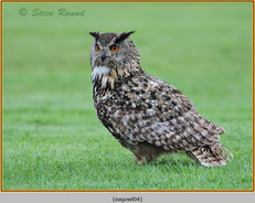 eagle-owl-04c.jpg