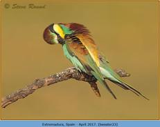bee-eater-23.jpg