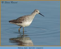 marsh-sandpiper-11.jpg