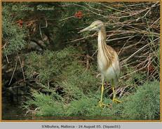 squacco-heron-01.jpg