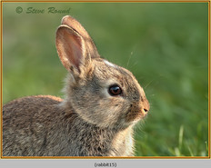rabbit-15.jpg