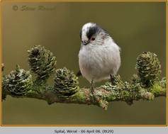 long-tailed-tit-29.jpg