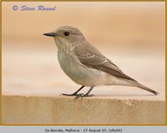 spotted-flycatcher-09.jpg