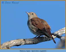 nightingale-02.jpg
