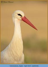 white-stork-30.jpg