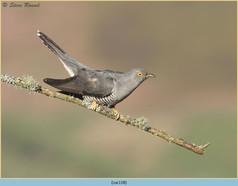 cuckoo-118.jpg