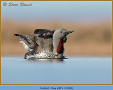 red-throated-diver- 98.jpg