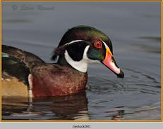 wood-duck-04.jpg