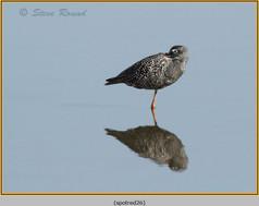 spotted-redshank-26.jpg