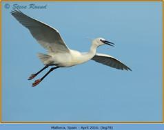 little-egret-78.jpg