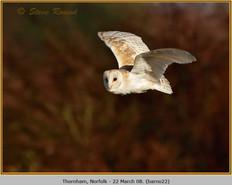 barn-owl-22.jpg