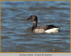 brent-goose-15.jpg