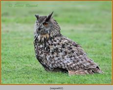 eagle-owl-02c.jpg