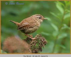 wren-15.jpg
