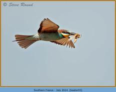 bee-eater-03.jpg