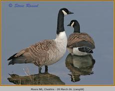 canada-goose-08.jpg