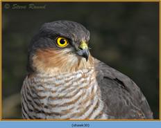 sparrowhawk-30.jpg