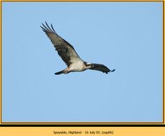osprey-06.jpg