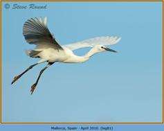 little-egret-81.jpg