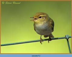 wood-warbler-71.jpg