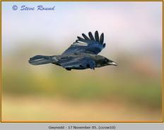 carrion-crow-10.jpg