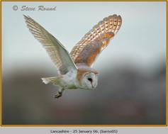 barn-owl-05.jpg