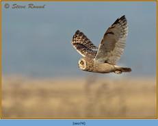 short-eared-owl-74.jpg