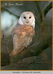 barn-owl-04.jpg