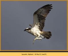 osprey-25.jpg