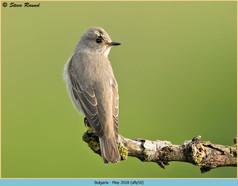 spotted-flycatcher-50.jpg