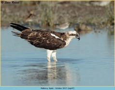osprey-47.jpg
