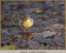 grey-wagtail-32.jpg