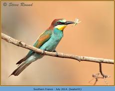 bee-eater-01.jpg