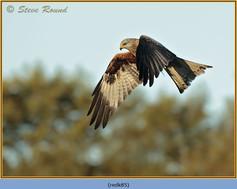 red-kite-85.jpg