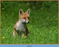 fox-72.jpg