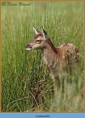 red-deer-69.jpg
