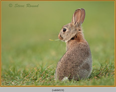 rabbit-19.jpg