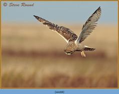 short-eared-owl-68.jpg
